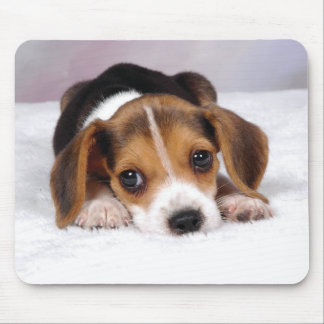 Chiot de beagle tapis de souris