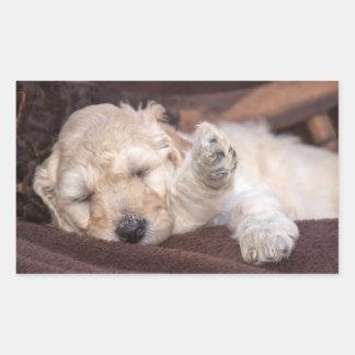 Chiot de caniche standard de sommeil sticker rectangulaire