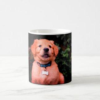 Chiot de golden retriever mug