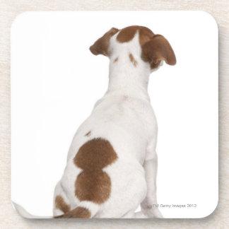 Chiot de Jack Russell Terrier (3 mois) Dessous-de-verre