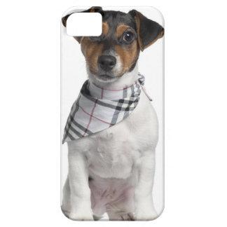 Chiot de Jack Russell Terrier (4 mois) Étuis iPhone 5
