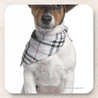 Chiot de Jack Russell Terrier (4 mois) Sous-bock