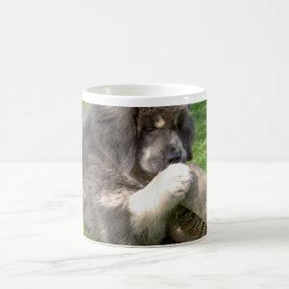 Chiot de mastiff tibétain avec le balai mug blanc
