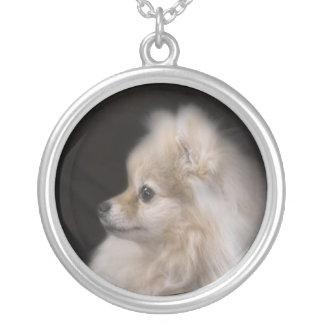 Chiot de pose adorable mignon de Pomeranian Collier