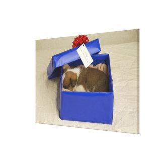 Chiot dormant dans une boîte-cadeau impressions sur toile
