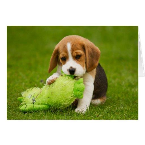Chiot doux de beagle avec le jouet c lin carte de v ux - Chiot beagle gratuit ...