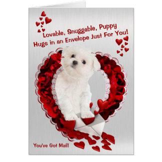Chiot maltais - mignon superbe vous avez le carte de vœux