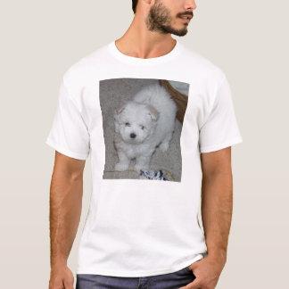 chiot maltais t-shirt
