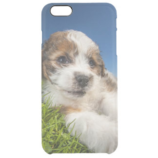 Chiot mignon (Shitzu) Coque iPhone 6 Plus