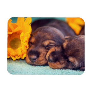 Chiots adorables de sommeil Doxen Magnet Flexible