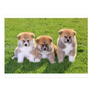 Chiots de chien d'Akita Inu Cartes Postales