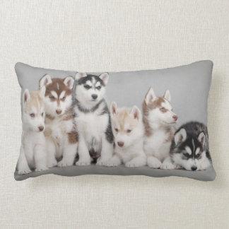 Chiots de chien de traîneau sibérien sur le coussin décoratif