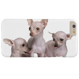 Chiwawa chauve (5 et 7 mois) coque iPhone 6 plus barely there