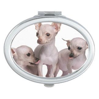 Chiwawa chauve (5 et 7 mois) miroir de voyage