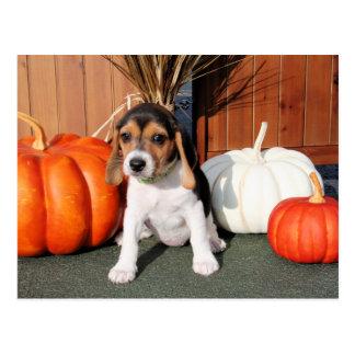 Chloe - beagle Photo-1 Carte Postale