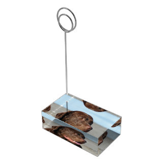 Chocolat labrador retriever porte-cartes de placement