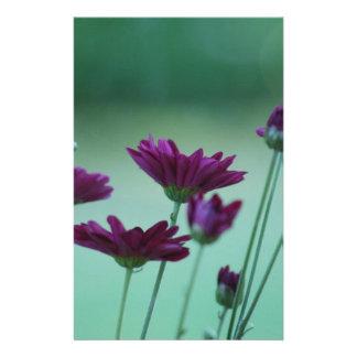 Chrysanthème et signification papeterie