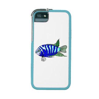 Cichlid rayé bleu coque iPhone 5