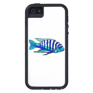 Cichlid rayé bleu coques iPhone 5 Case-Mate