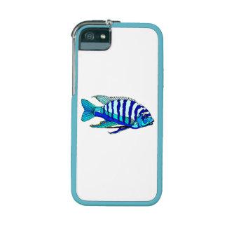 Cichlid rayé bleu étuis pour iPhone  5/5S