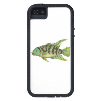 Cichlid rayé vert étuis iPhone 5