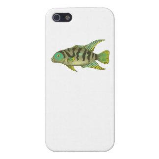 Cichlid rayé vert iPhone 5 case