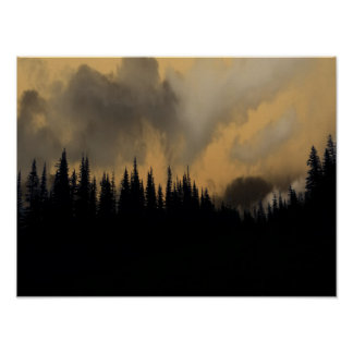 Ciel menaçant et arbres de parc national de poster