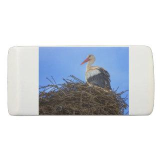 Cigogne blanche européenne, ciconia, dans le nid gomme