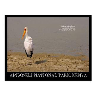 cigogne Jaune-affichée, parc national d'Amboseli, Cartes Postales