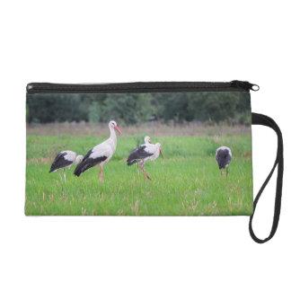 Cigognes blanches de migration, ciconia, dans un sac à main avec dragonne