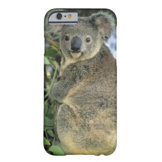 Cinereus de koala, de Phascolarctos), mis en Coque iPhone 6 Barely There