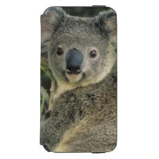 Cinereus de koala, de Phascolarctos), mis en Coque-portefeuille iPhone 6 Incipio Watson™