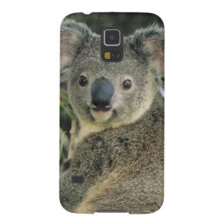 Cinereus de koala, de Phascolarctos), mis en Coques Galaxy S5