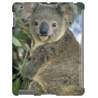 Cinereus de koala, de Phascolarctos), mis en dange Coque iPad
