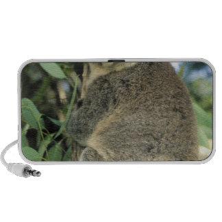 Cinereus de koala, de Phascolarctos), mis en dange Système De Haut-parleurs