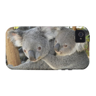Cinereus Queensland de Phascolarctos de koala Étui iPhone 4/4S