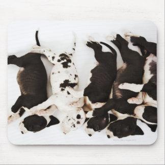 Cinq chiots de great dane de harlequin dormant tapis de souris