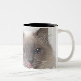 cinza de gato de caneca mug bicolore