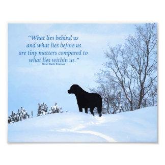 Citation noire de Labrador - ce qui se trouve en Impression Photo