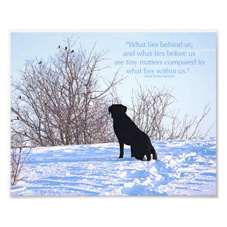 Citation noire de Labrador - ce qui se trouve en Photo D'art
