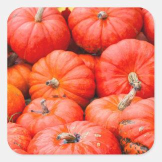 Citrouilles oranges au marché, Allemagne Sticker Carré