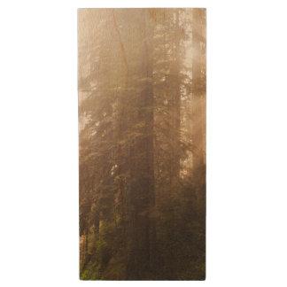Clé USB Arbres de séquoia en brouillard de matin avec des
