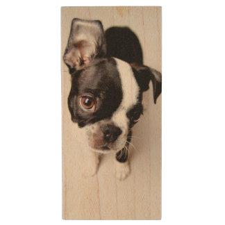 Clé USB Chiot d'Edison Boston Terrier