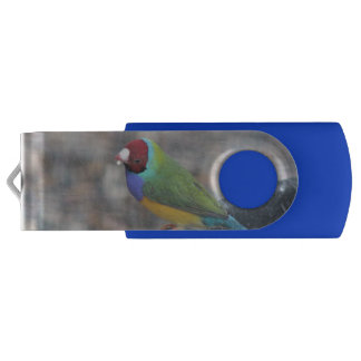 Clé USB Matin de Gouldian à vous