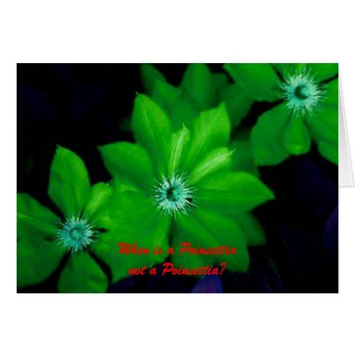 Clematis_2, quand un Poinsettianot est-il une poin Carte De Vœux