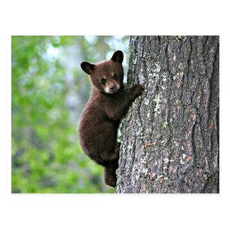 Club d'ours grimpant à un arbre carte postale