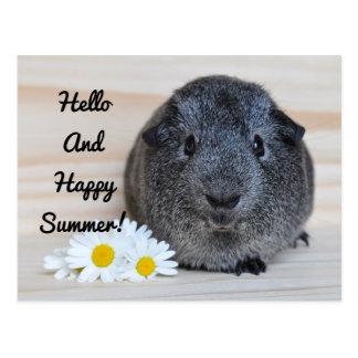 Cobaye heureux d'été carte postale
