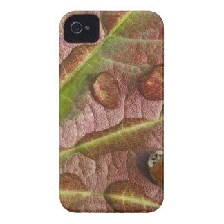 Coccinelle sur la feuille d'érable couverte de coques iPhone 4 Case-Mate