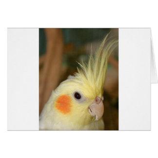 Cockatiel Cutie Carte De Vœux