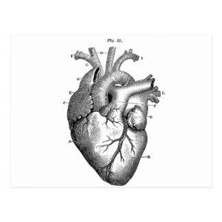 Coeur anatomique noir carte postale